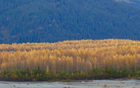 Alaska's Autumn