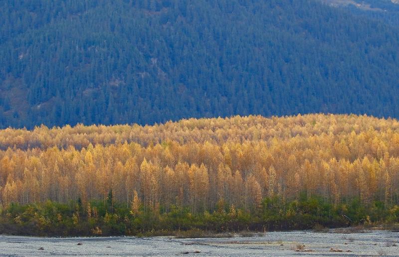Alaskas Autumn