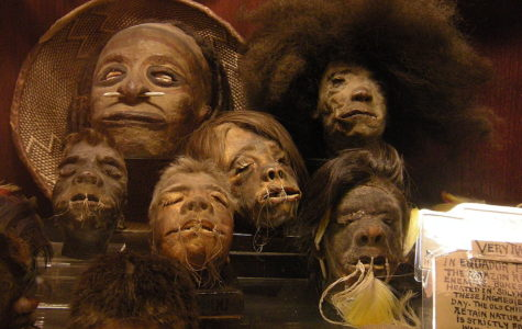 Shrunken Heads: Real or Not?