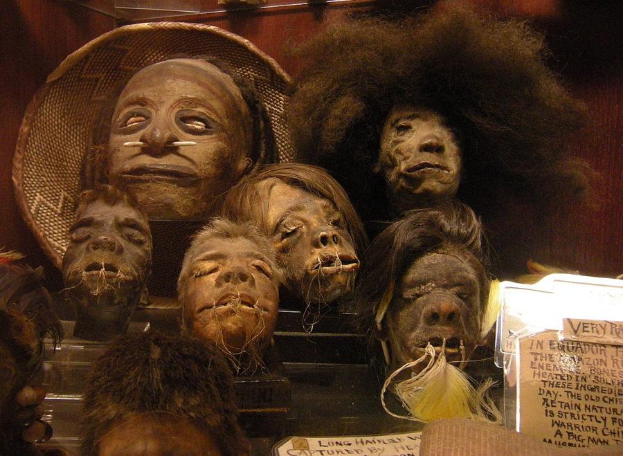 Shrunken Heads: Real or Not?