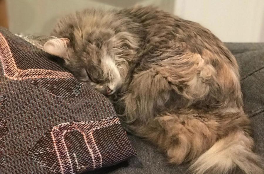 Pet Spotlight- Fluffy