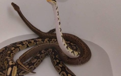 Pet Spotlight-John's Seven Snakes
