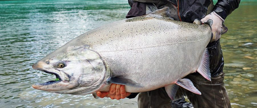 Snagging+Chromers